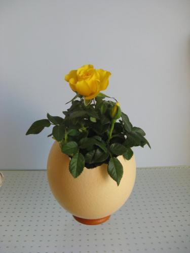 Straußeneivase mit gelber Rose